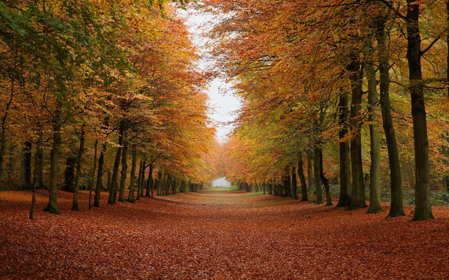fall forest background (2)